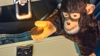 arscoin-monkey